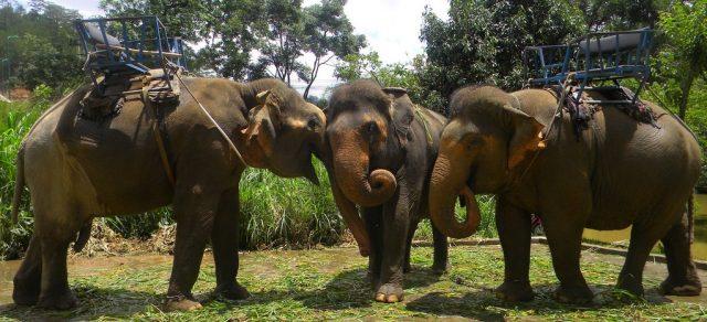 Trải nghiệm cưỡi voi thú vị ở Khu Du lịch Thác Prenn. (Ảnh: ST)