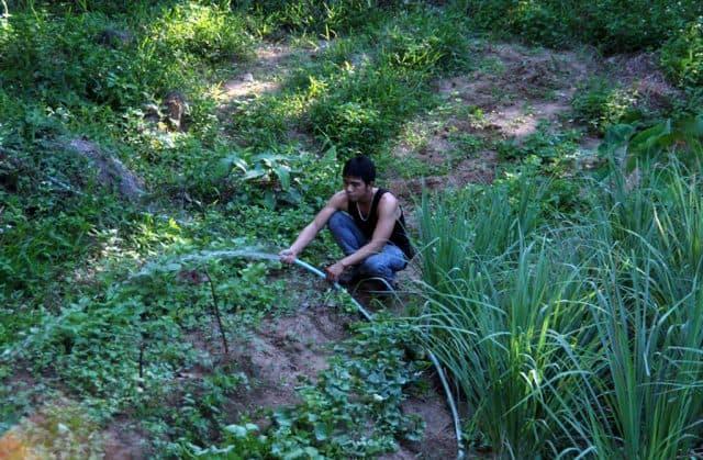 Thưởng thức món rau rừng tự tay người dân trồng ( Ảnh: ST)