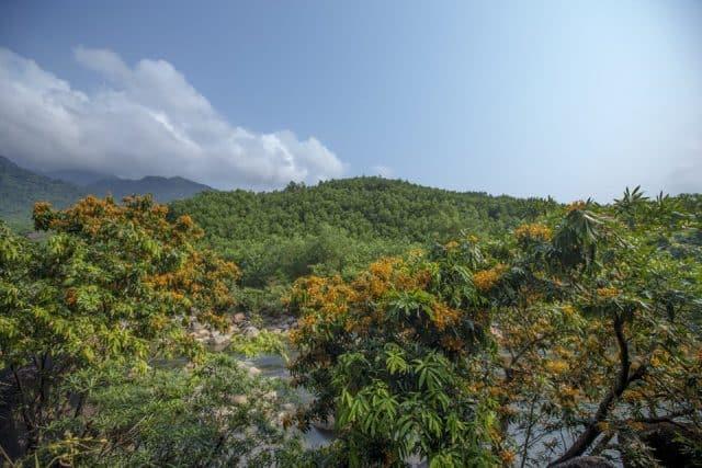 Tản bộ nơi những khu rừng nhiệt đới sẽ mang lại cho bạn những phút giây giải tỏa căng thẳng, hòa mình tận hưởng cùng thiên nhiên. (Ảnh: ST)