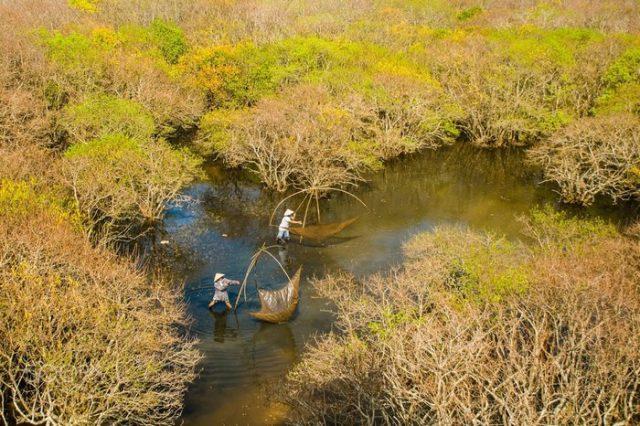 Rừng Rú Chá che chắn sự xâm nhập của nước mặn. (Ảnh: ST)