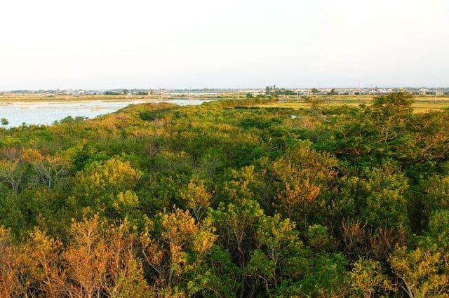 Sông nước cây cối đã vẽ lên ở nơi đây một bức họa mùa thu vàng tuyệt đẹp. (Ảnh: ST)