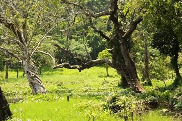 Khu bảo vệ rừng, tài nguyên ở Đà Nẵng ( Ảnh: ST)