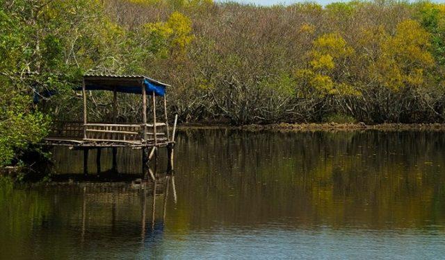 Khung cảnh yên bình tĩnh lặng bên trong rừng Rú Chá. (Ảnh: ST)