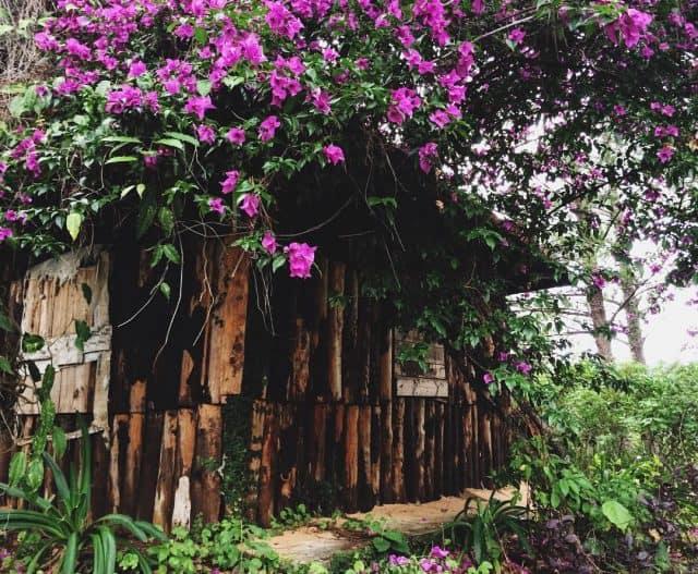 Căn nhà gỗ xinh xắn nằm cạnh đèo (Ảnh ST)