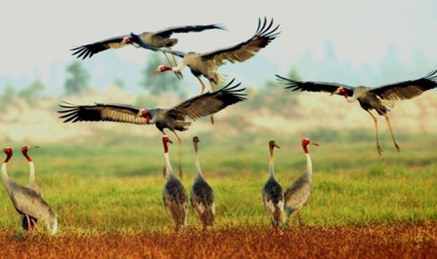 vuồn quốc gia tràm chim