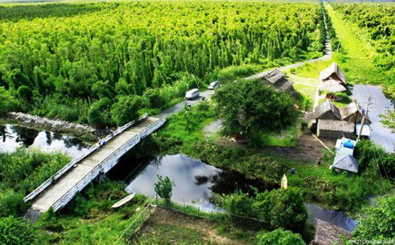 Kinh nghiệm phượt rừng Quốc gia U Minh Hạ từ A-Z