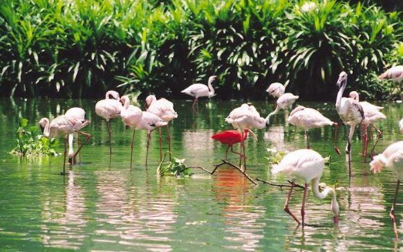 Vườn chim Bạc Liêu