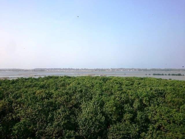 View rừng ngập mặn Rú Chá tuyệt đẹp khi nhìn từ trên cao. (Ảnh: ST)