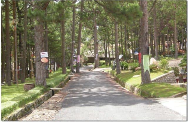 Lối đi với hàng cây xanh mát trong bảo tàng Lâm Đồng (Ảnh: ST)