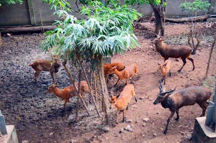 vườn thú đầm sen