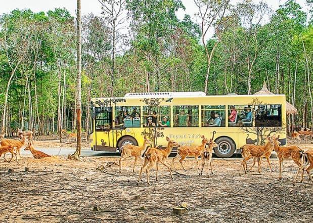 khu vực Safari Vườn thú Vinpearl Phú Quốc