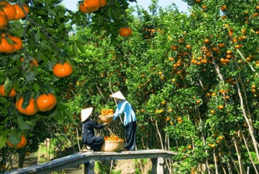 vườn trái cây ở tây ninh