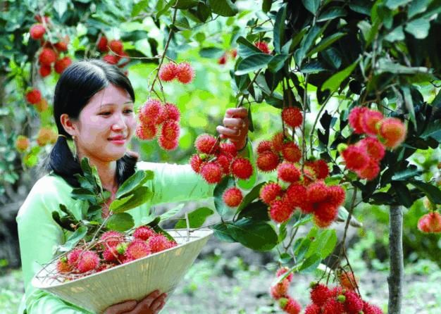 vườn trái cầy gò chùa