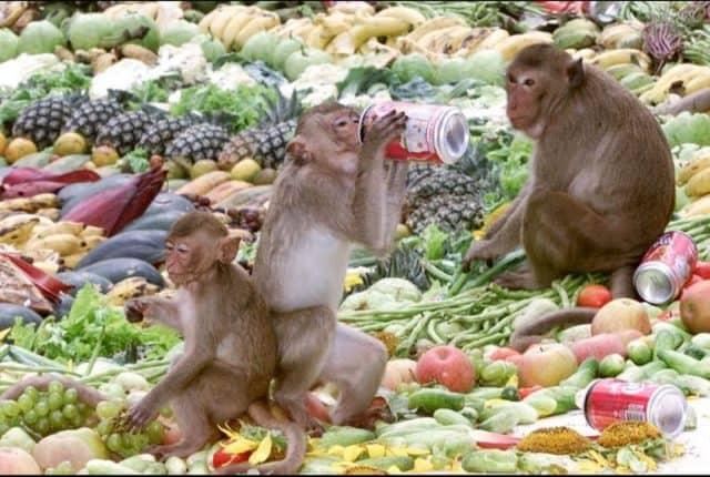 Buổi buffet của những chú khỉ (Ảnh ST)