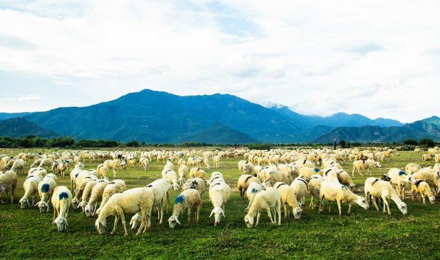 Mê mẩn Đồng cừu An Hòa - Điểm checkin gây sốt giới trẻ