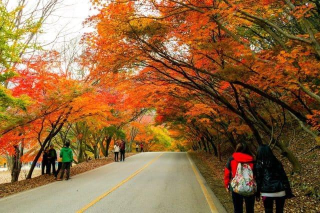 Bạn có thể đến Đài Loan vào mùa thu hoặc mùa hè (Ảnh ST)