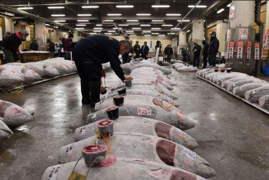 khu đáu giá cá ngừ