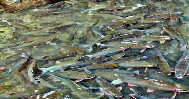 Suối cá thần Cẩm Lương