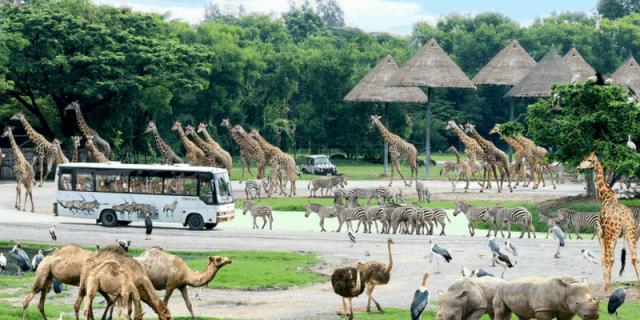 Vườn thú đầu tiên của Việt Nam (ảnh ST)