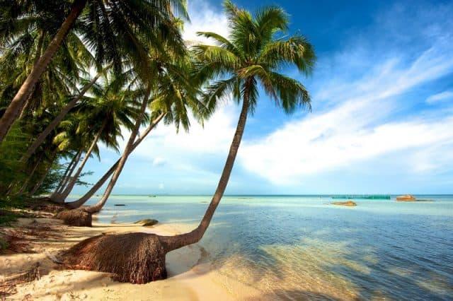 Cảnh nước biển xanh kết hợp với hàng cọ xanh ben bờ biển (ảnh ST)