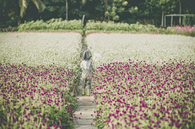 Vườn hoa những ngày đầu còn vắng khách tham quan (ảnh ST)