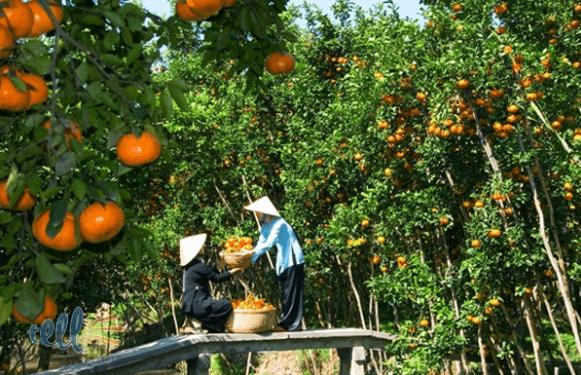 Nơi đây là vựa cây trái của Tiền Giang không bao giờ vơi