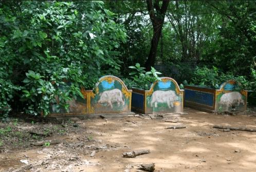 Du lịch chùa Dơi Sóc Trăng, bạn chắc chắn sẽ nghe người ta kháo nhau về loài vật lạ lùng này (ảnh ST)