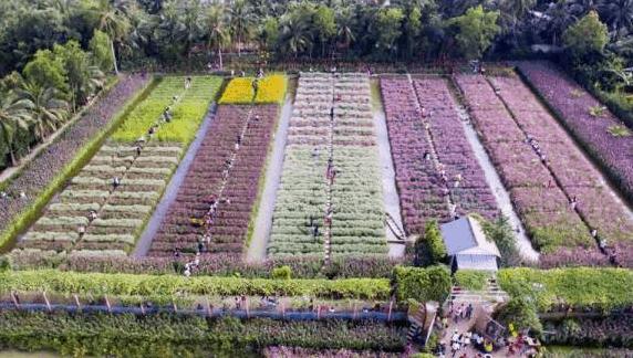 Vườn hoa nhìn từ trên cao (ảnh ST)
