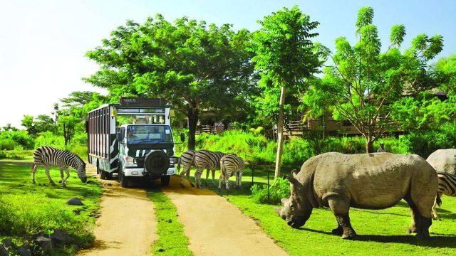 Xe bus trong vườn thú (ảnh ST)