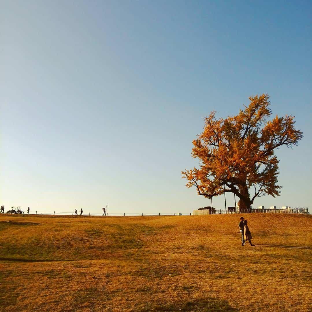 cảnh mùa thu hàn quốc