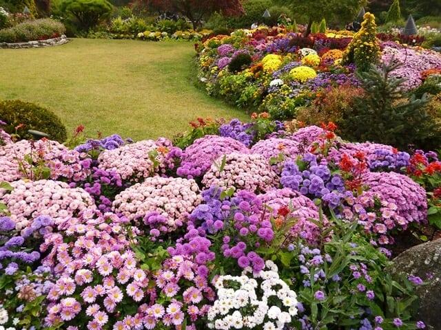 Các loài hoa rực rỡ ở thành phố Gapyeong (Ảnh: ST)