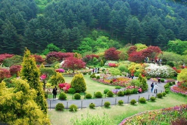 Vườn hoa Morning Calm nổi tiếng Hàn Quốc (Ảnh: ST)
