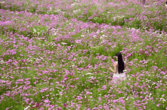Mãn Đình Hồng nổi tiếng với những luống hoa đẹp nao lòng (ảnh ST)