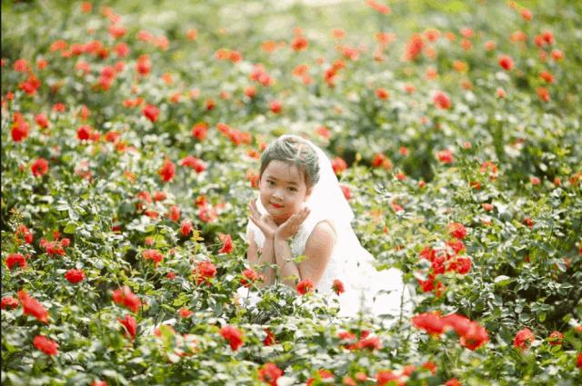 Những hình ảnh đẹp tại vườn hoa Mãn Đình Hồng (ảnh ST)