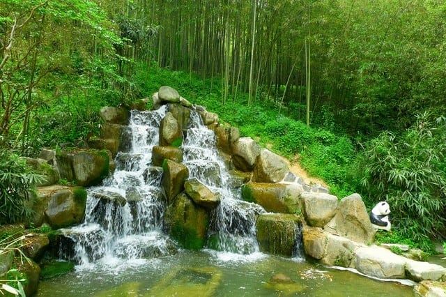 Vườn trúc nhân tạo nổi tiếng ở Hàn Quốc (Ảnh: ST)