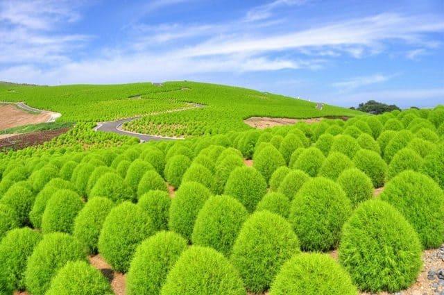 Công viên Hitachi đẹp nhất vào mùa thu ở Nhật Bản (ảnh ST)