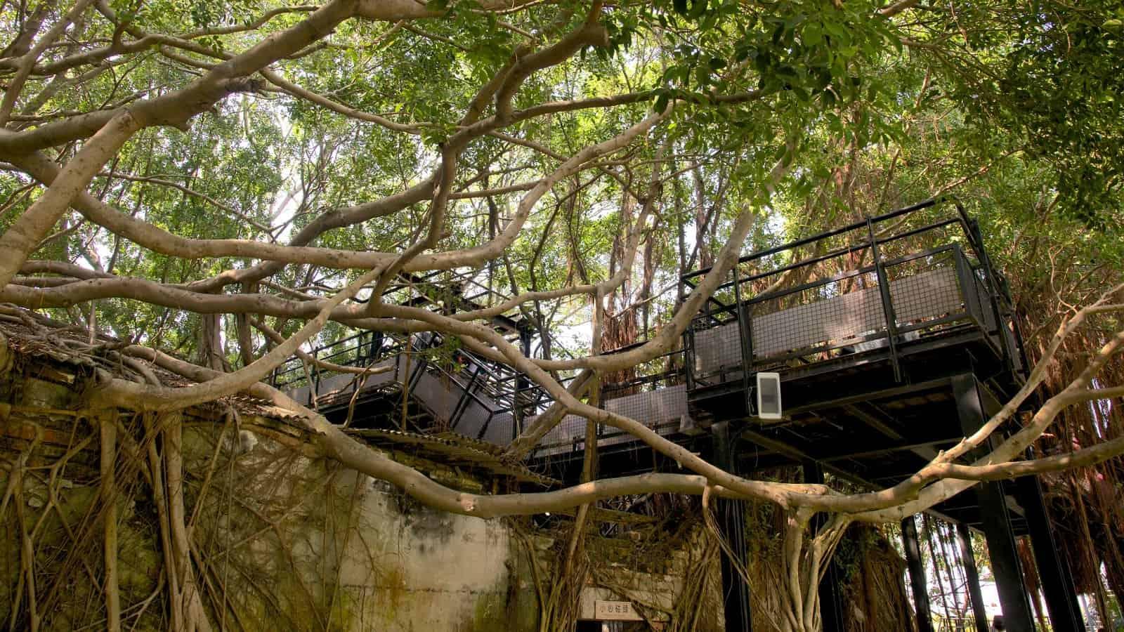 Anping Tree House