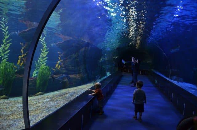 Thủy cungBusan Aquarium có hàng ngàn loài cá khác nhau (ảnh ST)
