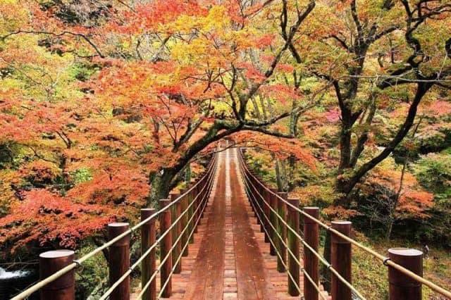 Thung lũng Hananuki là nơi ngắm lá phong lý tưởng