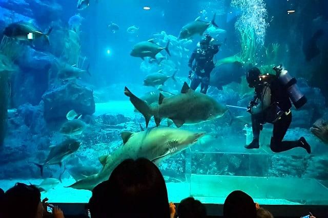 Busan Aquarium là nơi lí tưởng khám phá sinh vật biển (ảnh ST)