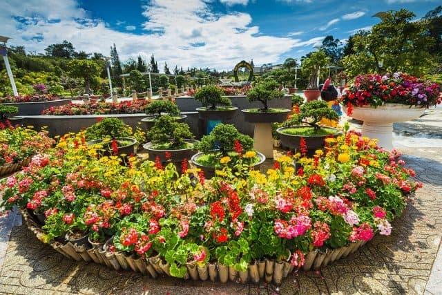 """Chủ đề Festival hoa Đà Lạt 2019 là """"Đà Lạt và Hoa''"""