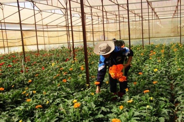 Lễ hội Hoa Đà Lạt còn để tôn vinh những người nông dân trồng hoa cần cù