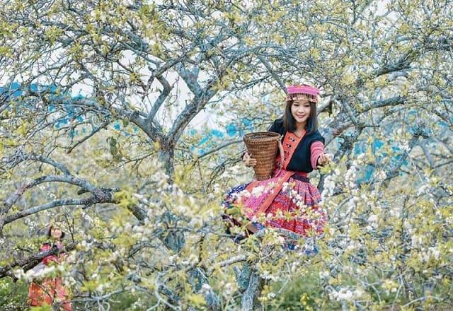 Khám phá cảnh đẹp Sapa mùa Xuân về