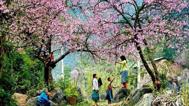 Vườn hoa Hàm Rồng ngất ngây lòng người bởi nét đẹp hoang dại và sặc sỡ xen lẫn