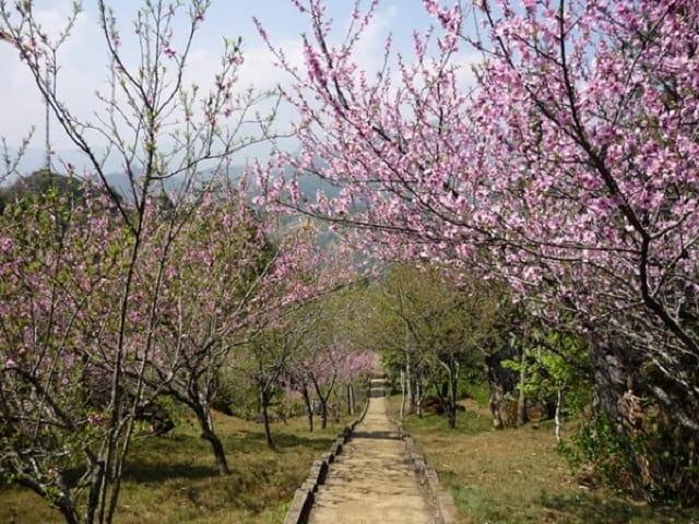 Vườn hoa hàm rồng Sapa, mảnh đất mê hoặc những ai tìm đến