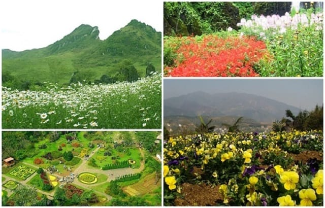 Vườn hoa Hàm Rồng Sapa, một Đà Lạt thu nhỏ
