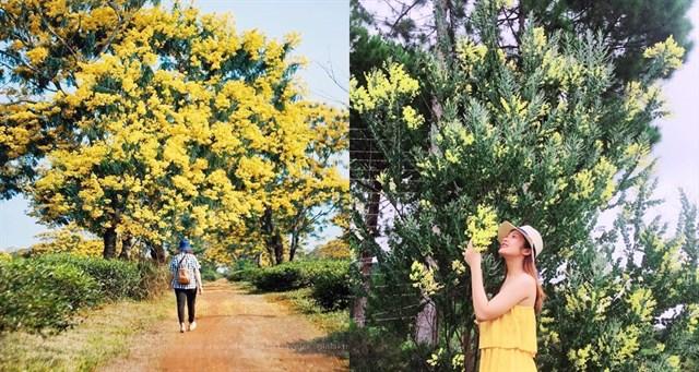 Hàng ngàn du khách tìm đến Đà Lạt để check in vào mùa Xuân