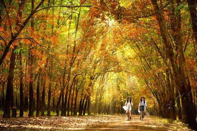 Bình Phước đẹp lãng mạn như Hàn Quốc vào mùa cao su thay lá