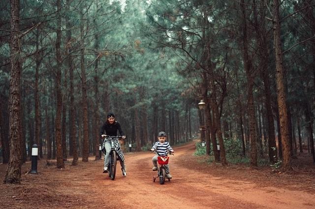 Đạp xe hay đi bộ thong dong trong rừng thông giúp bạn thực sự hòa mình với thiên nhiên