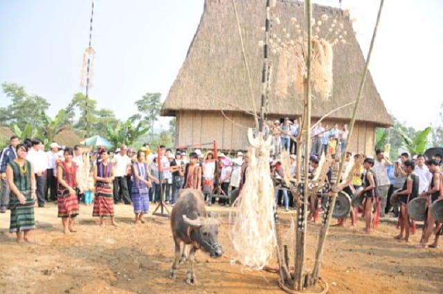 Lễ hội đâm trâu của người Brâu ở Kon Tum